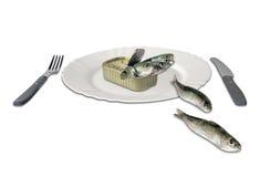 在罐头的沙丁鱼 库存图片