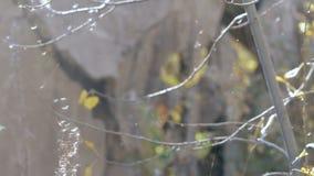 在网特写镜头的树 影视素材