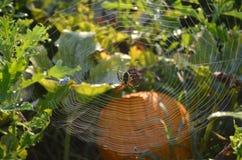 在网的拉链蜘蛛在南瓜补丁 免版税库存图片