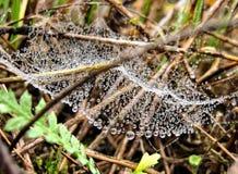 在网的早晨露水,在分支和叶子附近 库存图片