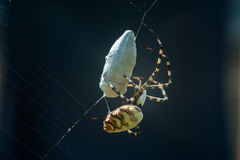 在网的蜘蛛与采矿 免版税库存照片