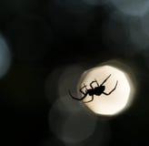在网的蜘蛛剪影 库存图片