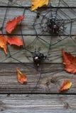 在网的蜘蛛在与秋叶的derevjanno背景上 免版税库存图片