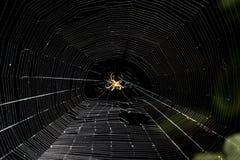 在网的蜘蛛在晚上 库存图片