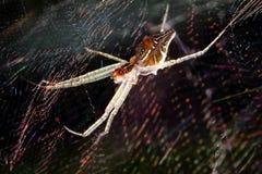 在网的蜘蛛 免版税库存照片