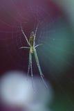 在网的议院蜘蛛 库存照片