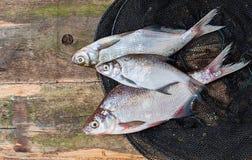 在网的鲜鱼在木背景 免版税图库摄影