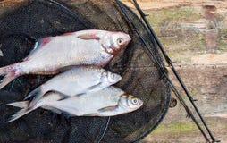 在网的鲜鱼在木背景 库存照片
