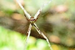 在网看起来的蜘蛛蠕动和可怕在自然背景 免版税库存图片