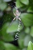 在网,下面的花园蜘蛛 免版税库存图片