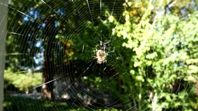 在网移动的蜘蛛 股票视频