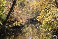 在罗克里克公园DC的秋天颜色 免版税库存照片
