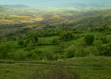 在罗多彼州山的看法,保加利亚 免版税库存图片