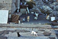在罗得岛海岛街道上的13只离群猫  库存图片