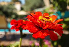 在罗得岛,希腊的植物群 免版税库存图片