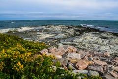 在罗德岛州海岸的黄色花  免版税库存照片