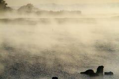 在罗托路亚湖的雾 库存照片