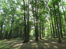 """在罗斯福公园的树在爱迪生, NJ,美国 Ð """" 免版税库存照片"""