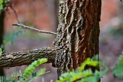 在罗望子树的蚂蚁 免版税库存照片