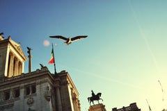 在罗马和海鸥的日落 免版税库存图片