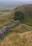 在罗马墙壁上的美国梧桐空白 诺森伯兰角,英国 图库摄影