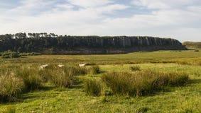 在罗马墙壁上的Cragg港湾 诺森伯兰角,英国 库存照片