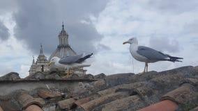 在罗马屋顶的海鸥家庭  库存图片