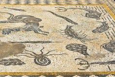 在罗马废墟的Orpfeus房子,古老罗马市里Volubilis难倒马赛克 摩洛哥 免版税库存照片