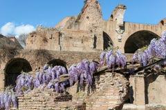 在罗马论坛的老废墟 库存图片