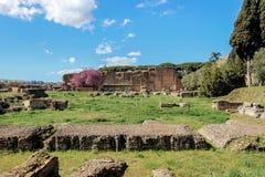 在罗马论坛的老废墟 免版税库存照片