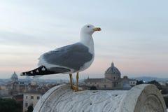 在罗马顶部的海鸥日落的 库存照片