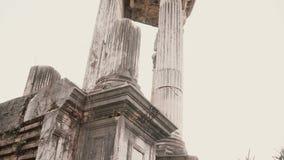 在罗马,意大利的一个轻的引人入胜的看法代表南部的植物围拢的白色古老大理石柱 股票视频