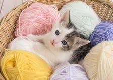 在羊毛之间球的逗人喜爱的小猫在查寻的篮子的 免版税库存图片