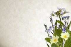 在羊皮纸背景的花 库存图片
