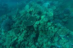 在美丽的五颜六色的珊瑚礁的Snorcheling在海 夏天职业 免版税库存图片