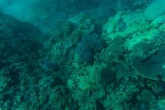 在美丽的五颜六色的珊瑚礁的Snorcheling在海 夏天职业 免版税库存照片