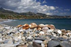 在美丽的夏天海滩的贝壳 库存图片