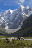 在美丽的山背景的马  免版税库存照片