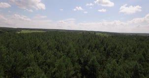 在美丽的森林鸟瞰图的飞行 影视素材