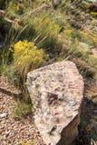 在美丽的沙漠地形前面的大唯一岩石 库存图片