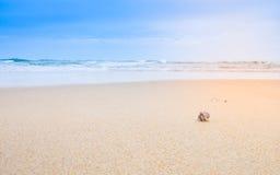 在美丽的海滩的一只小的寄居蟹 图库摄影