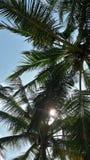 在美丽的海滩的棕榈树 免版税库存照片