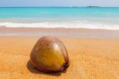 在美丽的海滩的椰子 免版税库存照片