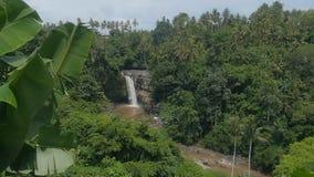 在美丽的热带密林中的瀑布巴厘岛的,慢动作的印度尼西亚 影视素材