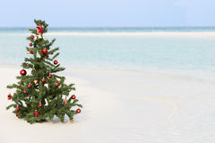 在美丽的热带海滩的圣诞树 免版税图库摄影