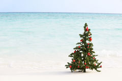 在美丽的热带海滩的圣诞树 库存图片