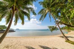 在美丽的热带海滩的棕榈树在酸值Kood海岛上 免版税图库摄影
