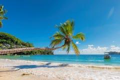 在美丽的牙买加海滩的棕榈 免版税图库摄影