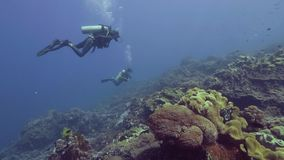 在美丽的珊瑚礁和鱼的轻潜水员潜水的水下的蓝色海 游泳水下的海洋和观看的潜水者 股票录像