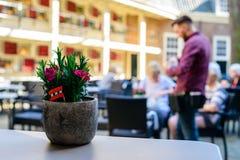 在美丽的盆栽植物的选择聚焦在街道的桌上 库存图片